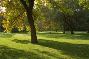 Calgary inner city parks