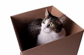Moving to Calgary Relocating to Calgary with Cats