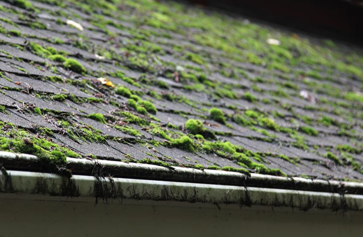 home buyer tips moss roof red flags to look out for