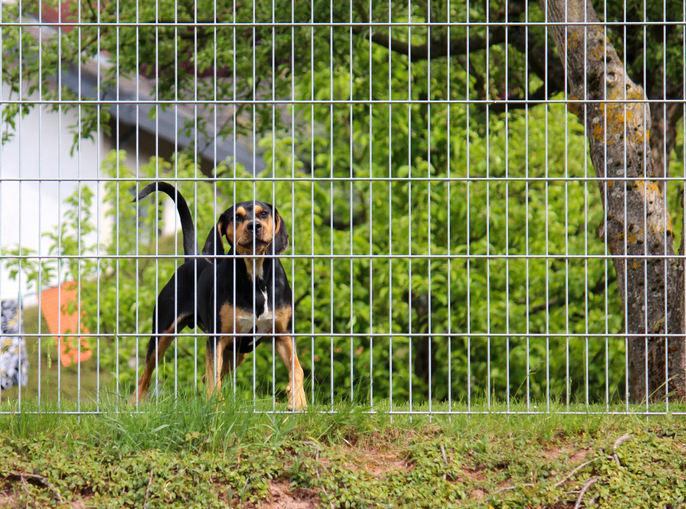 how to sell your home when you have pets neighbour's pets